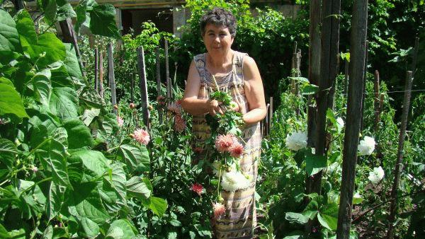 A kertészkedő Veress Éva.